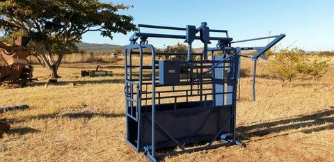 Cattle weighing equipment for sale